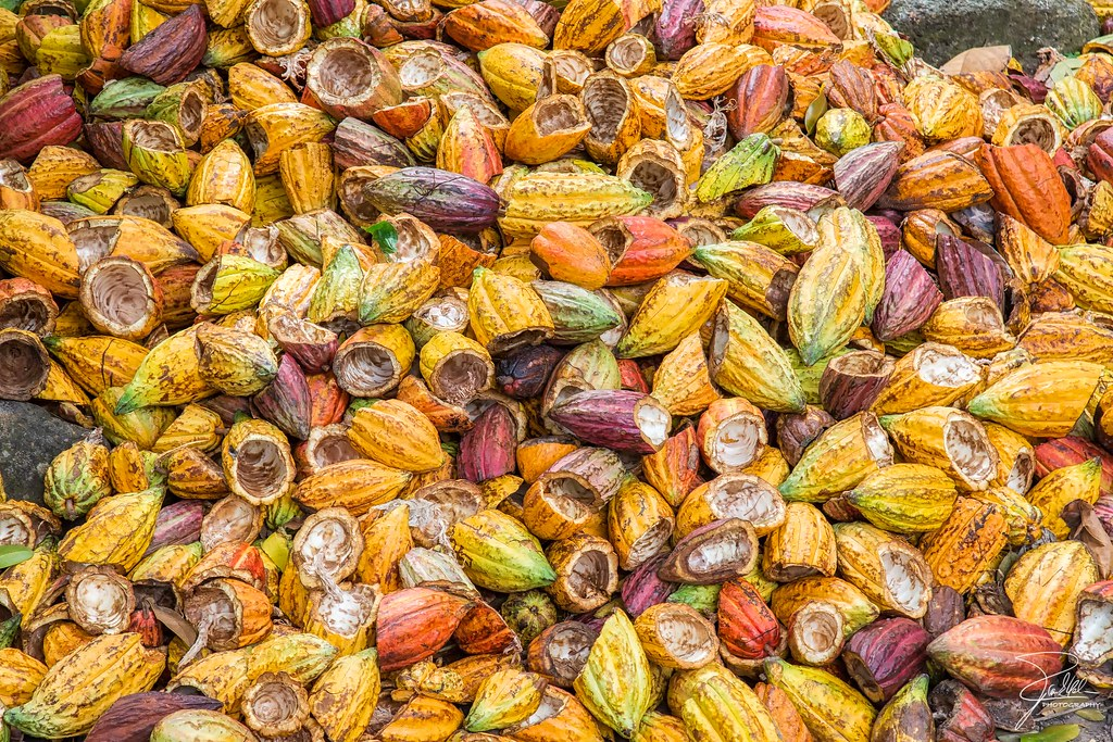 New biomass power plant (60MWe) in Ivory Coast using cocoa